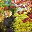 Side gate in fall colour