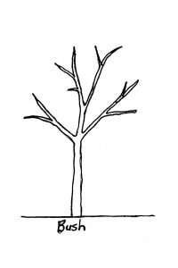 pruning form - bush