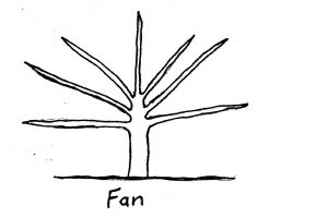 pruning form - fan