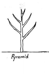 pruning form - pyramid