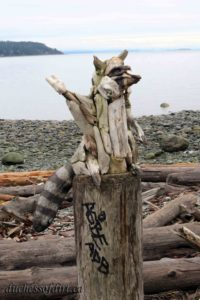 driftwood raccoon - Campbell River, BC
