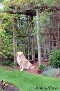 Sadie welcomes visitors to our garden