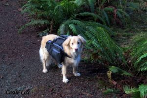 Sadie backpacking