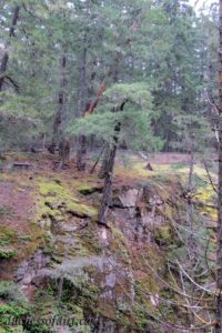 Tenacity of Life - Little Qualicum Falls Park